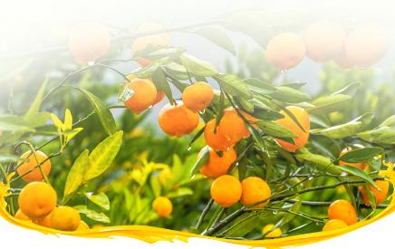 水果补充维生素c