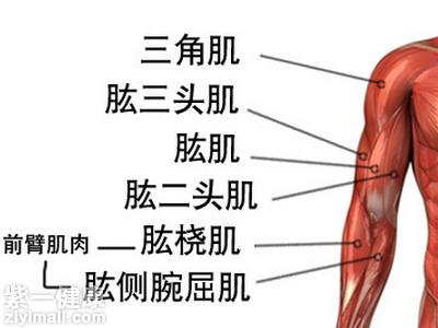 三角肌锻炼_平板支撑主要的支撑点就是手部,可以锻炼到肩三角肌,肱二头肌,肱