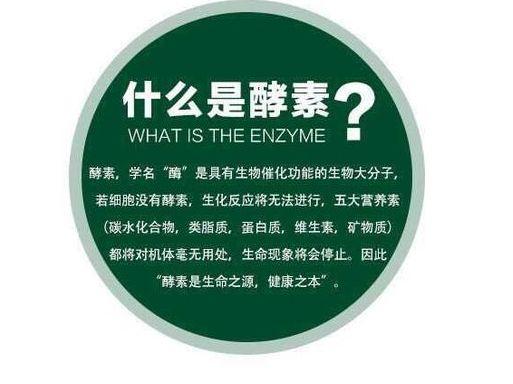 酵素的作用与功效,酵素的功效与作用